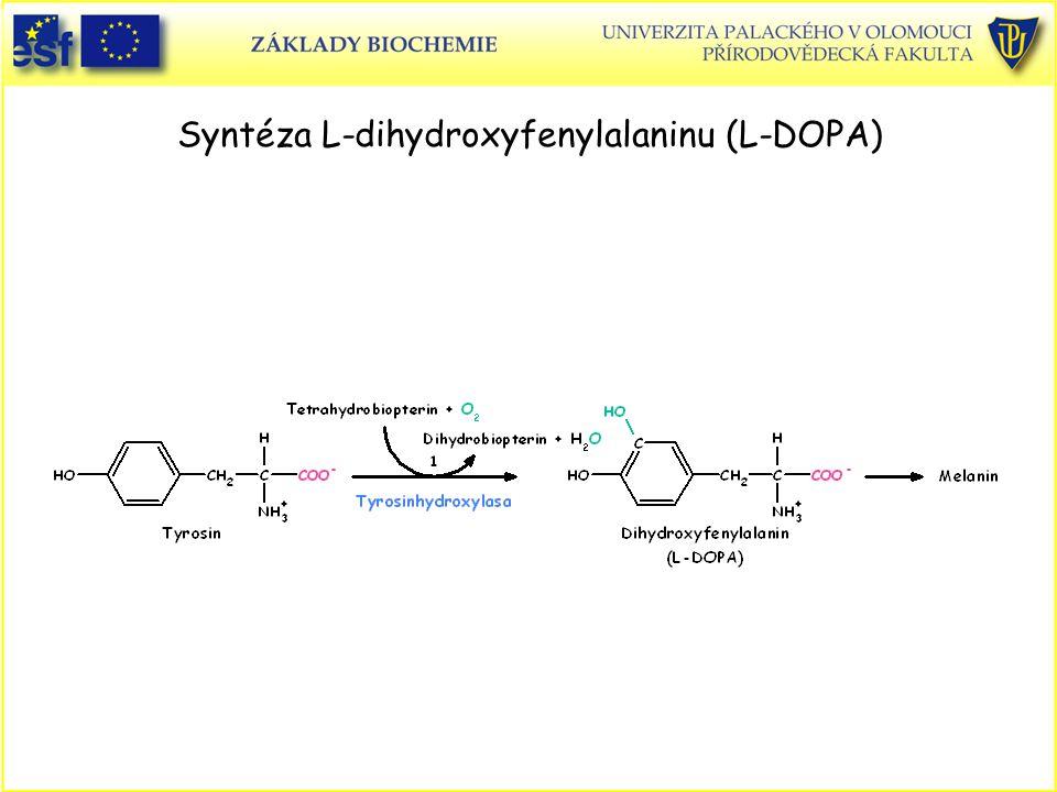Syntéza L-dihydroxyfenylalaninu (L-DOPA)