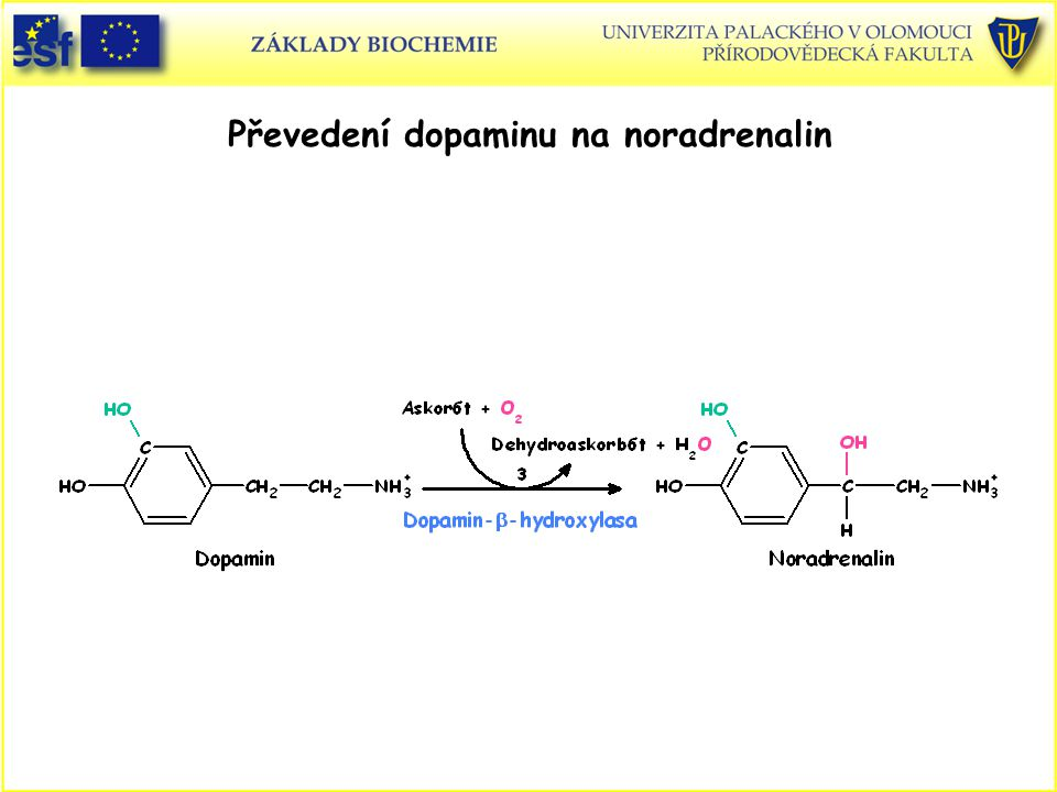 Převedení dopaminu na noradrenalin