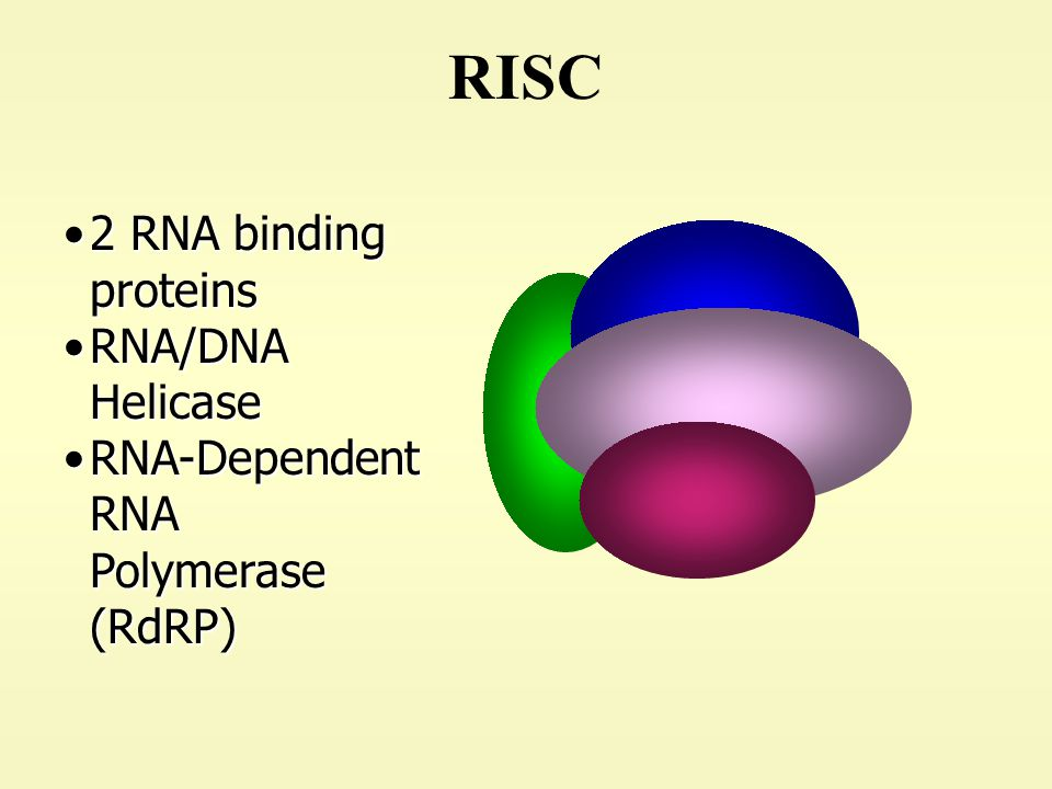 RISC 2 RNA binding proteins RNA/DNA Helicase