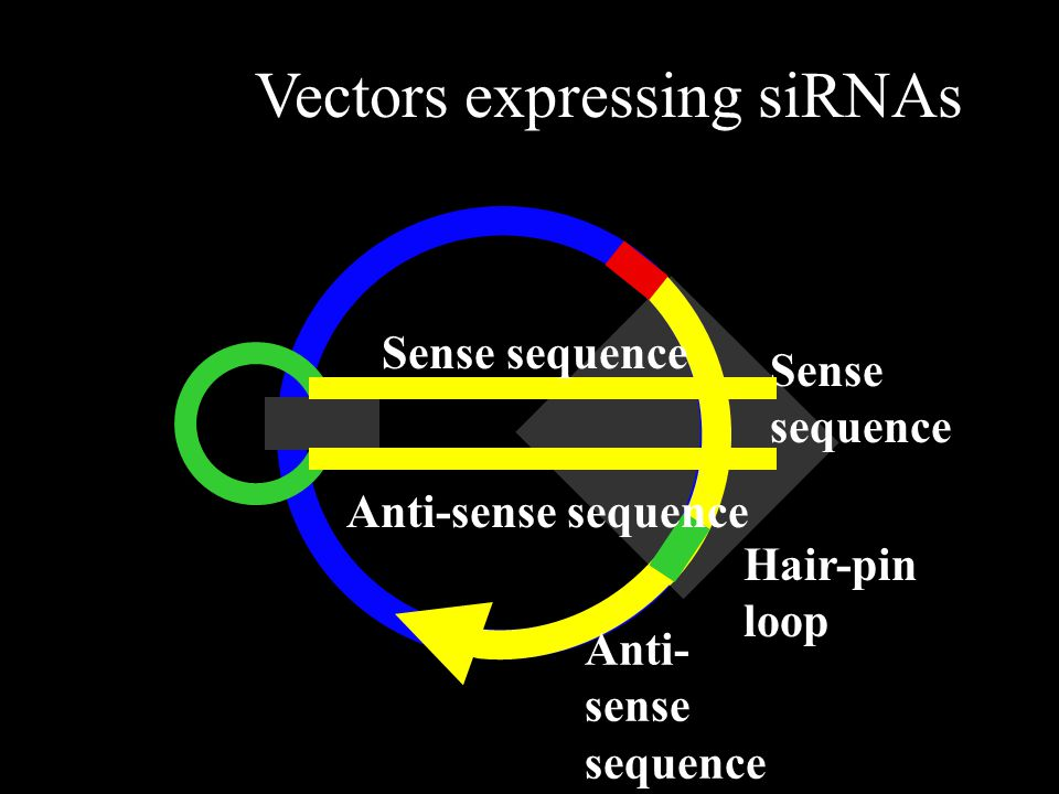 Vectors expressing siRNAs
