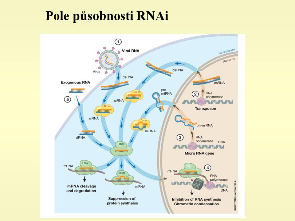 Pole působnosti RNAi