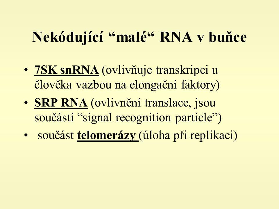 Nekódující malé RNA v buňce