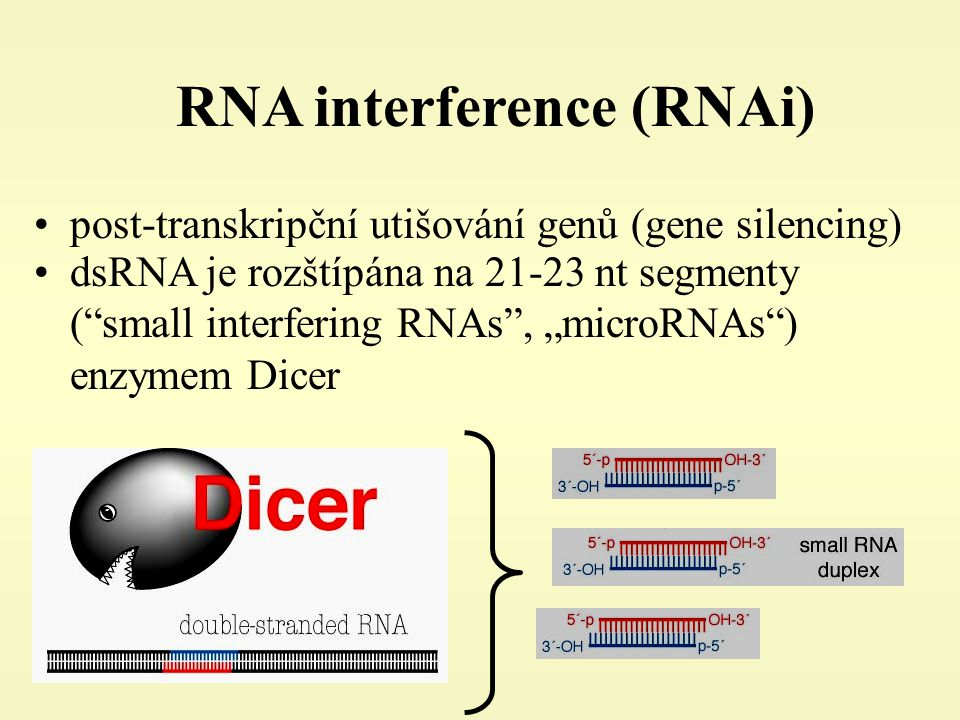 RNA interference (RNAi)