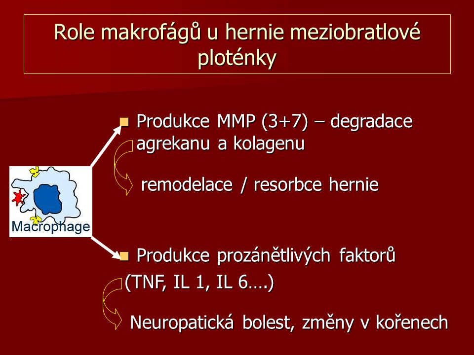 Role makrofágů u hernie meziobratlové ploténky