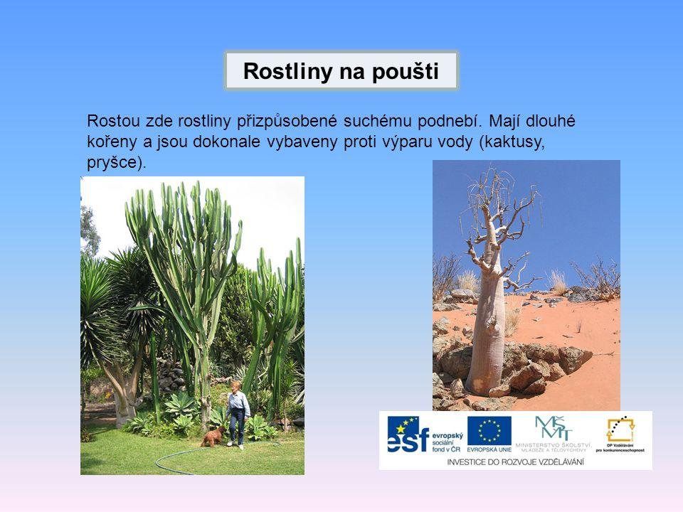 Rostliny na poušti Rostou zde rostliny přizpůsobené suchému podnebí.