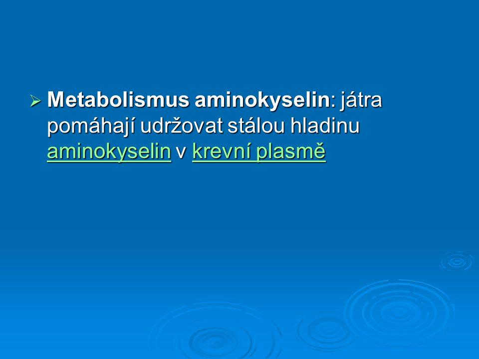 Metabolismus aminokyselin: játra pomáhají udržovat stálou hladinu aminokyselin v krevní plasmě