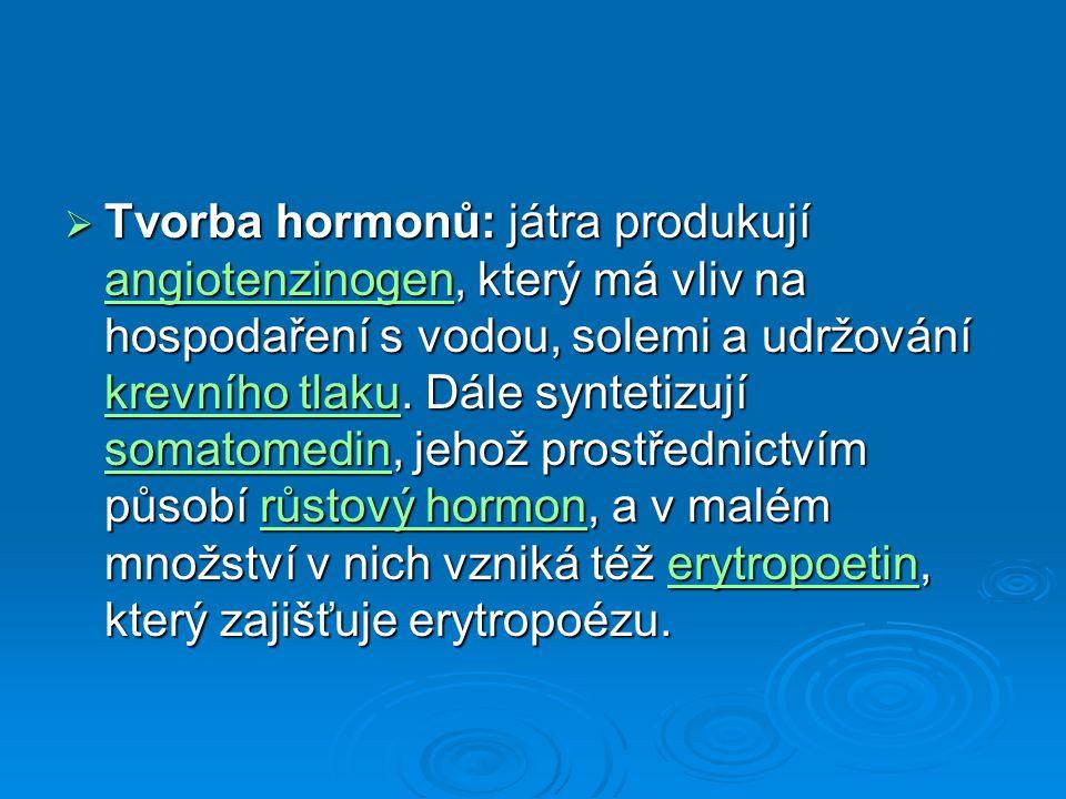 Tvorba hormonů: játra produkují angiotenzinogen, který má vliv na hospodaření s vodou, solemi a udržování krevního tlaku.