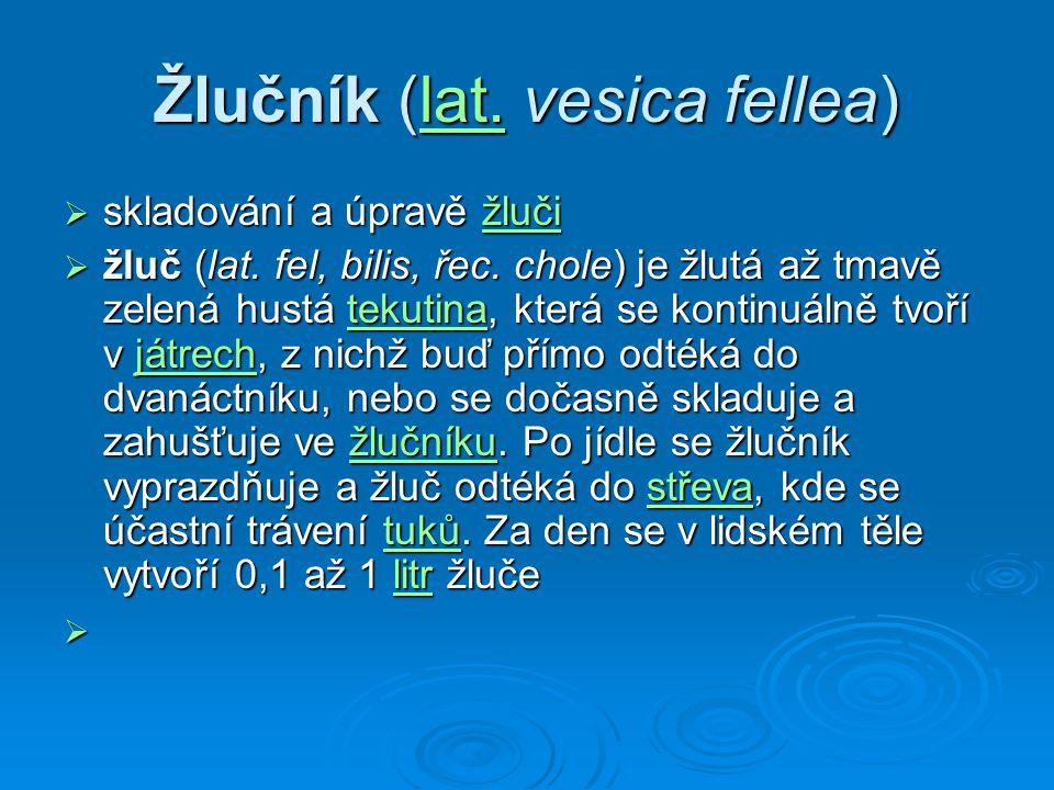 Žlučník (lat. vesica fellea)
