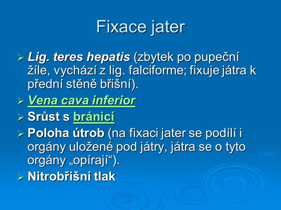 Fixace jater Lig. teres hepatis (zbytek po pupeční žíle, vychází z lig. falciforme; fixuje játra k přední stěně břišní).