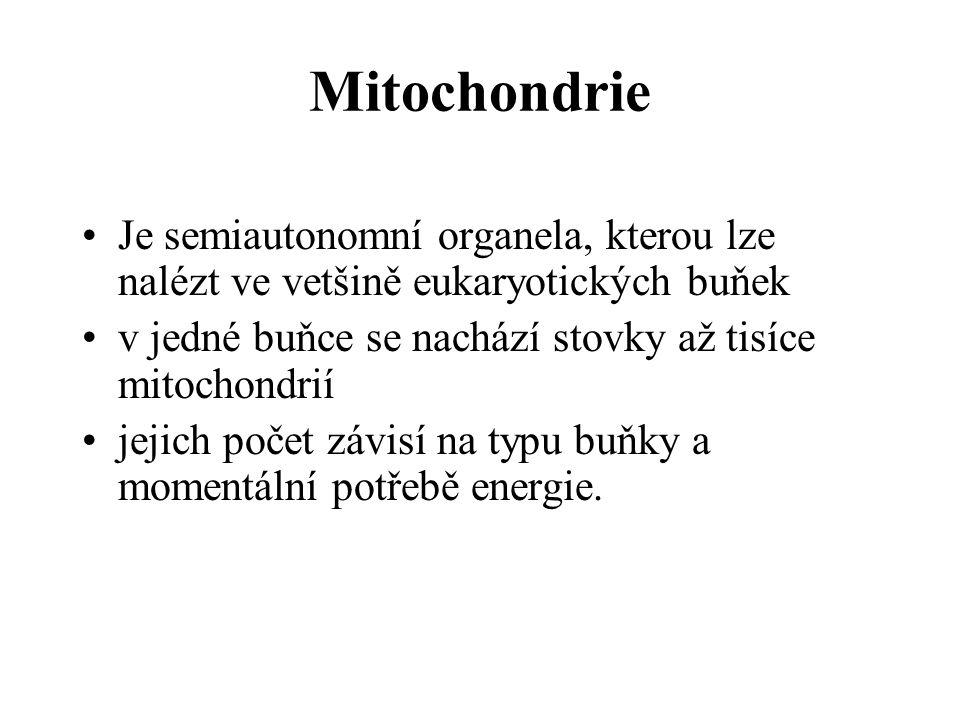 Mitochondrie Je semiautonomní organela, kterou lze nalézt ve vetšině eukaryotických buňek. v jedné buňce se nachází stovky až tisíce mitochondrií.