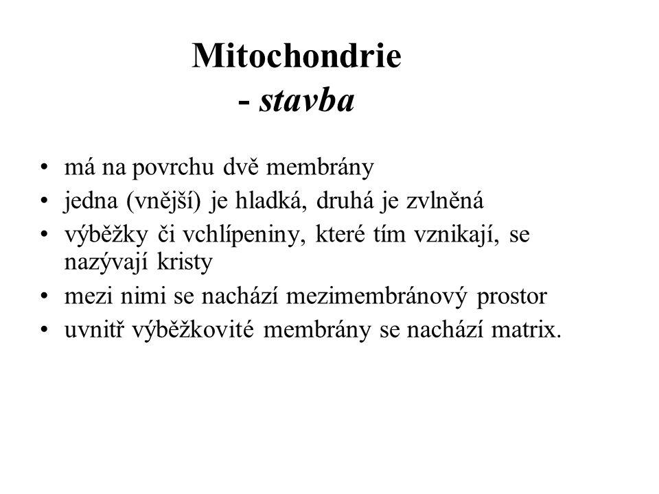 Mitochondrie - stavba má na povrchu dvě membrány