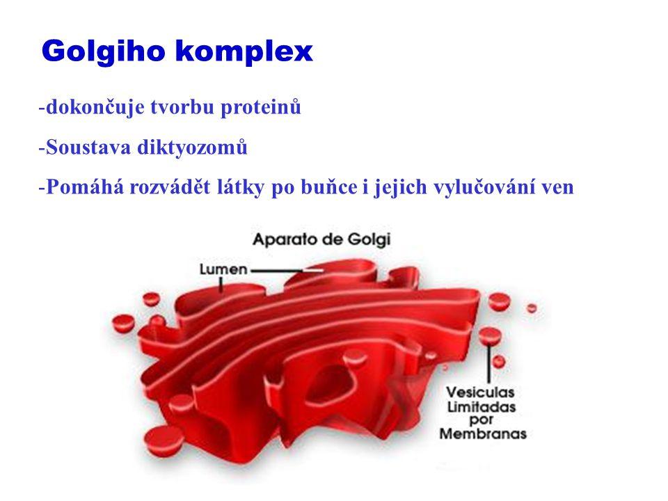 Golgiho komplex dokončuje tvorbu proteinů Soustava diktyozomů