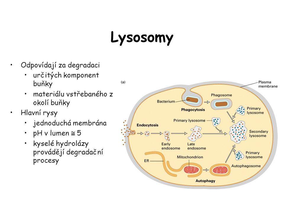 Lysosomy Odpovídají za degradaci určitých komponent buňky