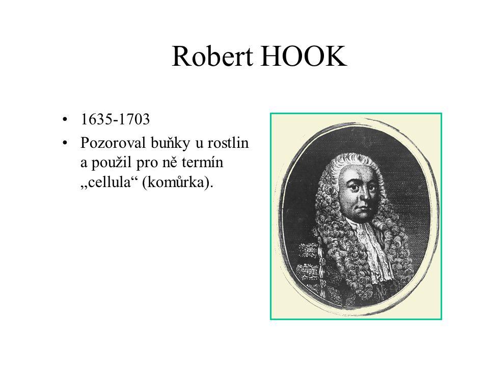 """Robert HOOK 1635-1703 Pozoroval buňky u rostlin a použil pro ně termín """"cellula (komůrka)."""