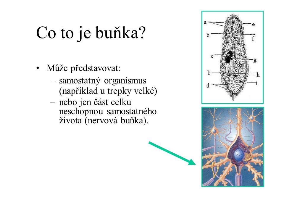 Co to je buňka Může představovat: