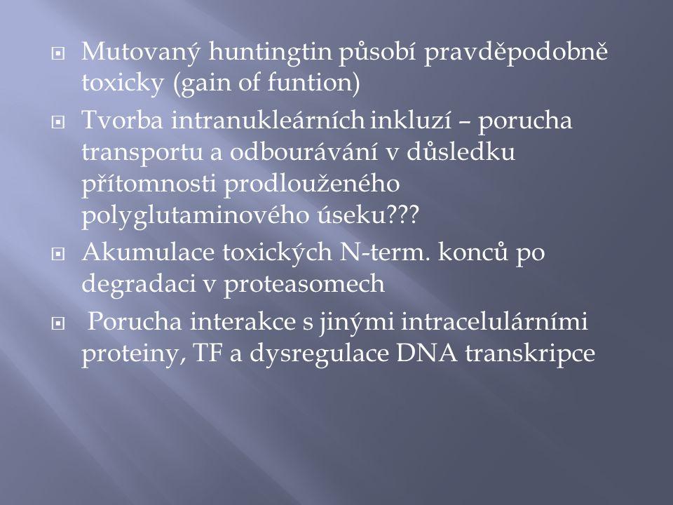 Mutovaný huntingtin působí pravděpodobně toxicky (gain of funtion)