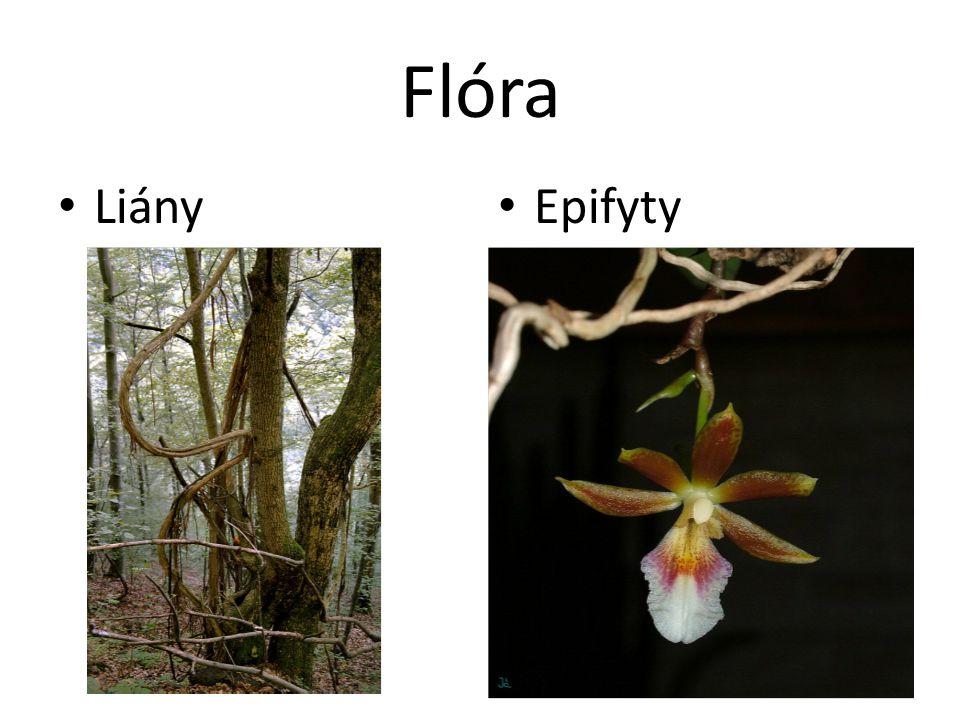Flóra Liány Epifyty 12