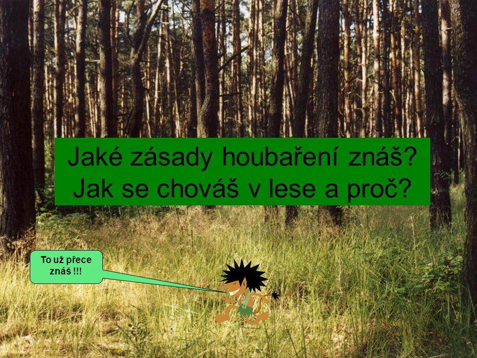 Jaké zásady houbaření znáš Jak se chováš v lese a proč