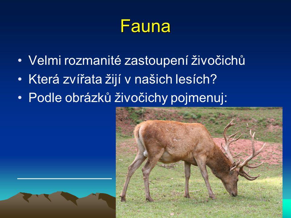 Fauna Velmi rozmanité zastoupení živočichů