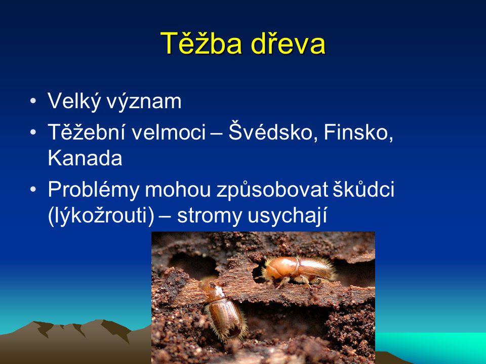 Těžba dřeva Velký význam Těžební velmoci – Švédsko, Finsko, Kanada