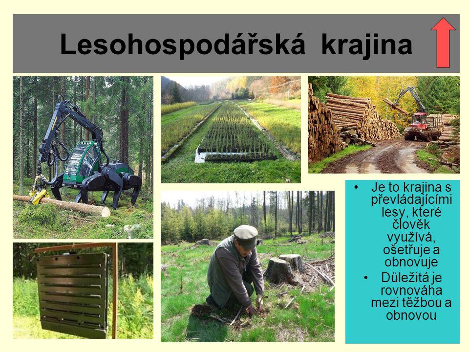 Lesohospodářská krajina