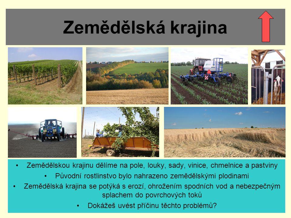 Zemědělská krajina Zemědělskou krajinu dělíme na pole, louky, sady, vinice, chmelnice a pastviny.