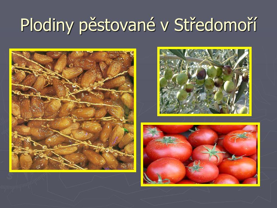 Plodiny pěstované v Středomoří