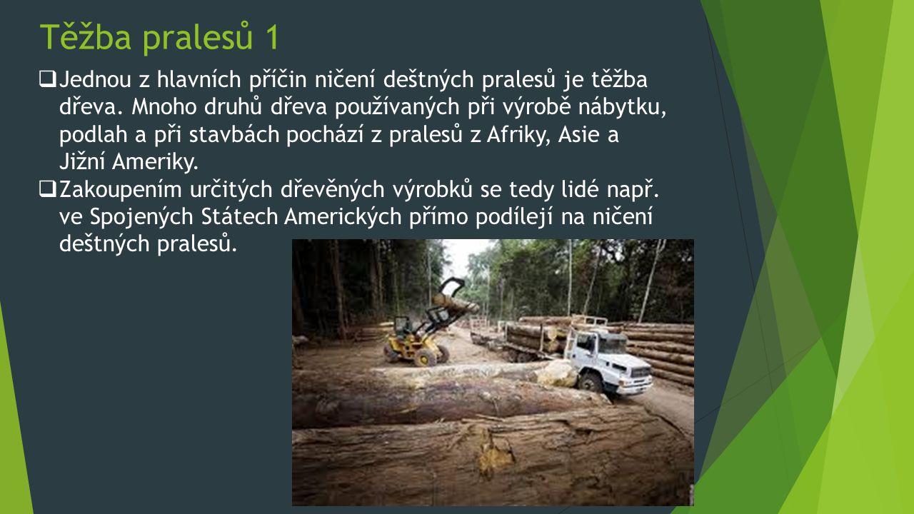 Těžba pralesů 1
