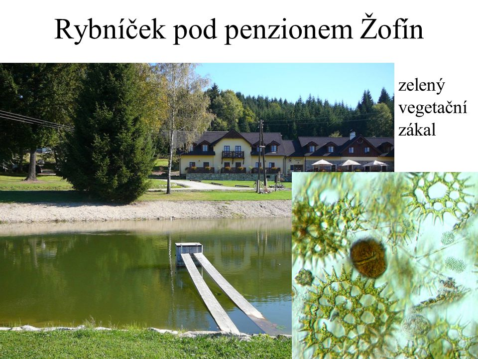 Rybníček pod penzionem Žofín