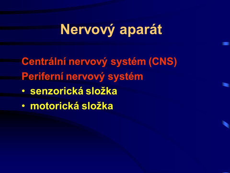 Nervový aparát Centrální nervový systém (CNS) Periferní nervový systém