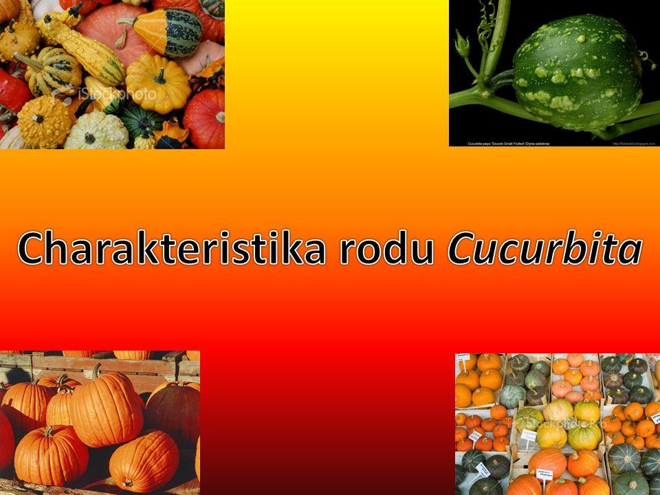 Charakteristika rodu Cucurbita