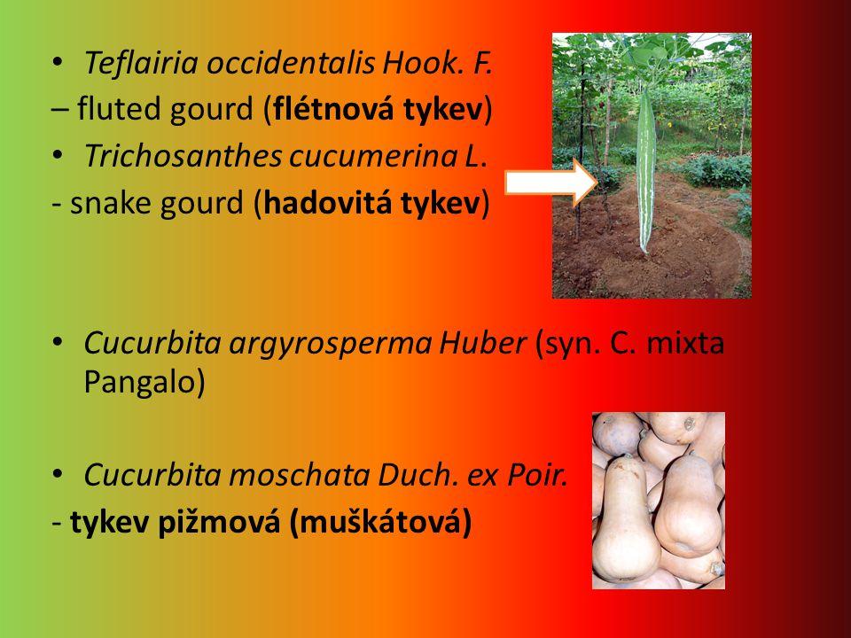 Teflairia occidentalis Hook. F.