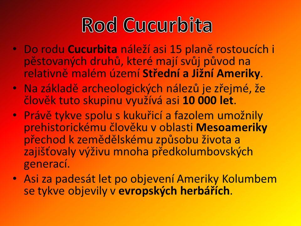 Rod Cucurbita