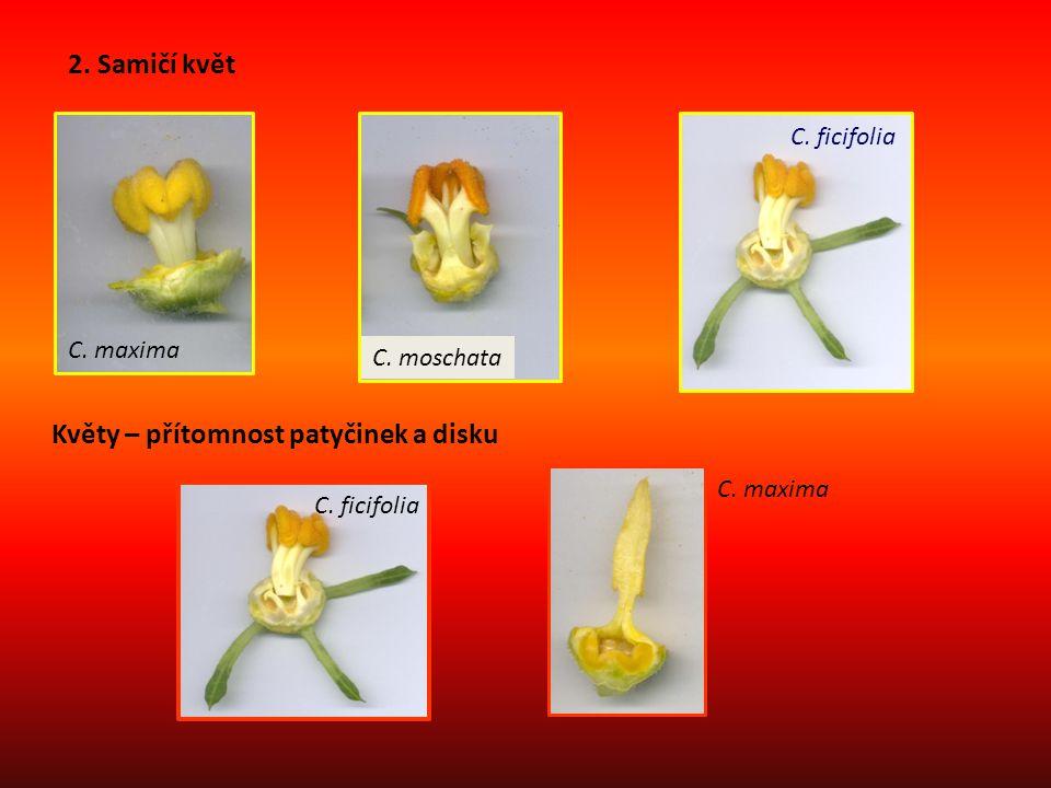 Květy – přítomnost patyčinek a disku