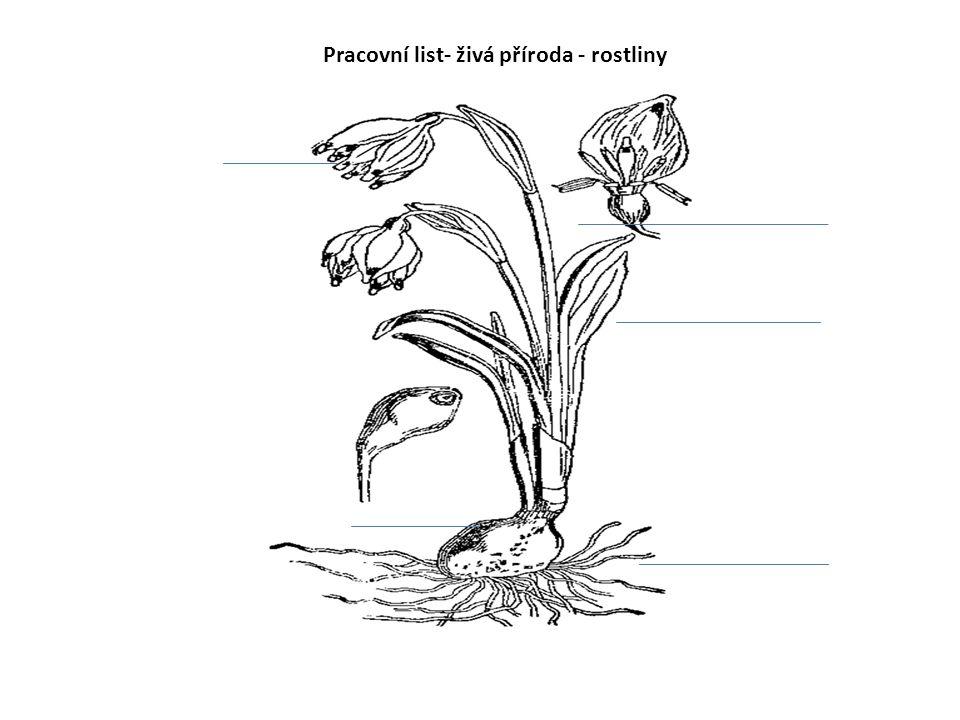 Pracovní list- živá příroda - rostliny