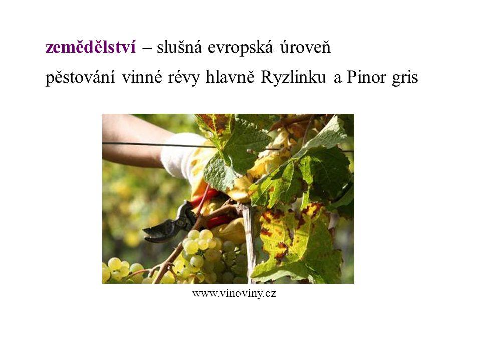 zemědělství – slušná evropská úroveň pěstování vinné révy hlavně Ryzlinku a Pinor gris