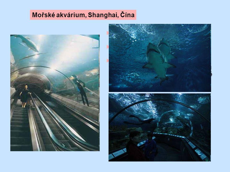 Mořské akvárium, Shanghai, Čína
