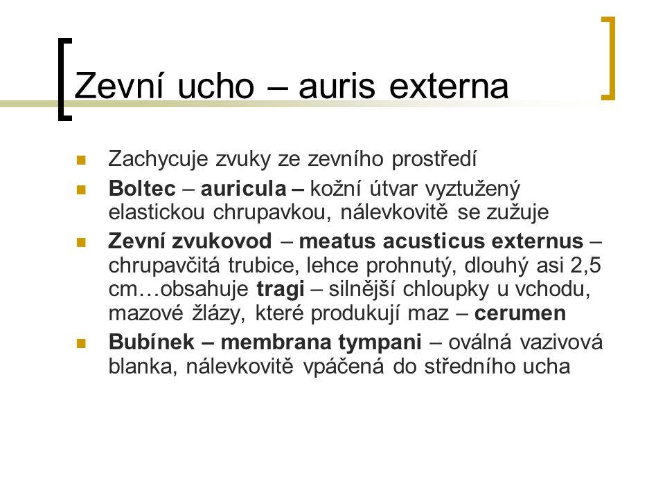 Zevní ucho – auris externa