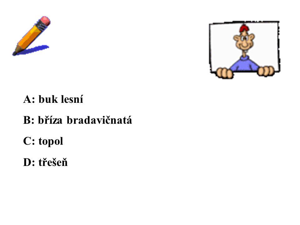 ŘEŠENÍ A: buk lesní B: bříza bradavičnatá C: topol D: třešeň