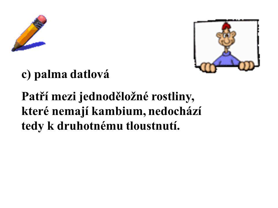 ŘEŠENÍ c) palma datlová
