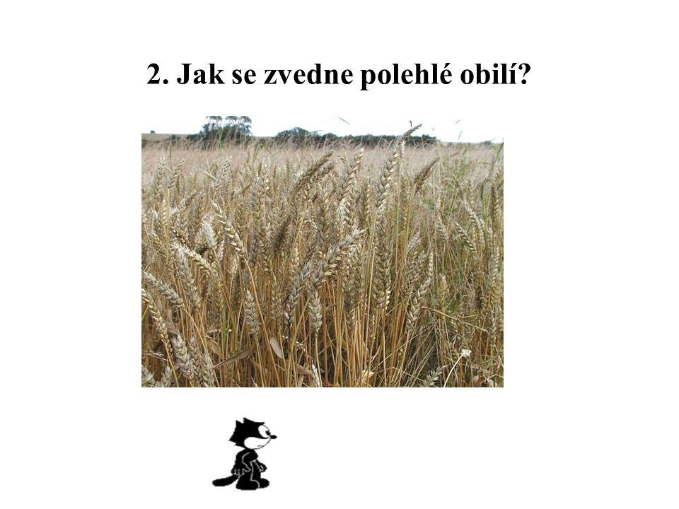2. Jak se zvedne polehlé obilí