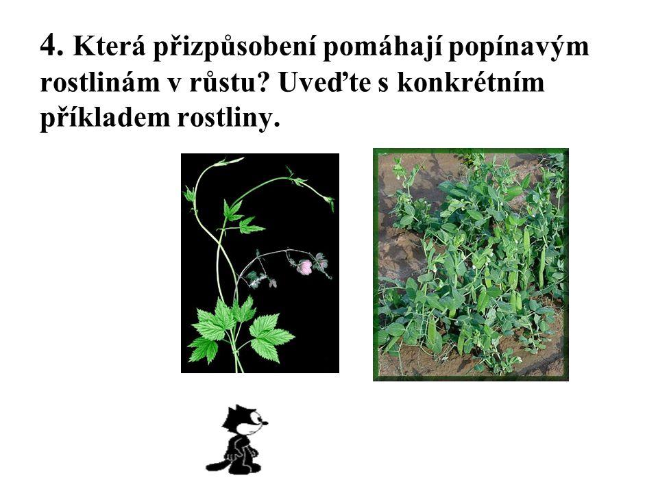 4. Která přizpůsobení pomáhají popínavým rostlinám v růstu