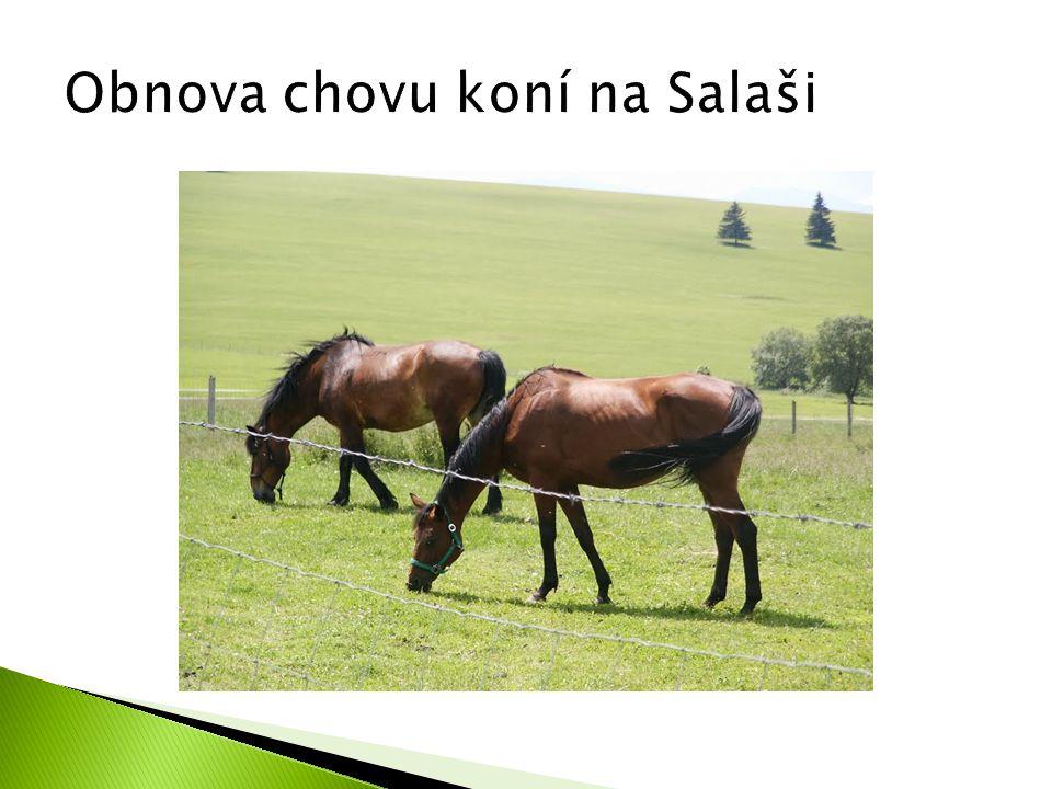 Obnova chovu koní na Salaši