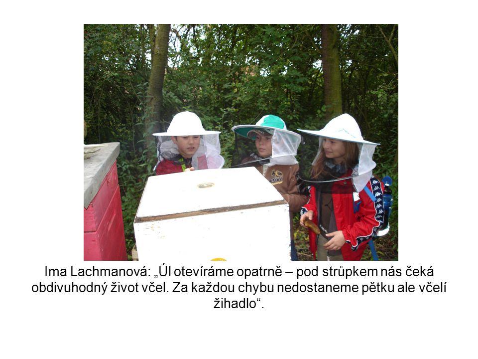 """Ima Lachmanová: """"Úl otevíráme opatrně – pod strůpkem nás čeká obdivuhodný život včel."""