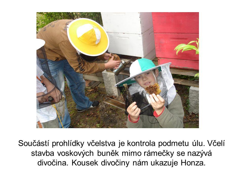 Součástí prohlídky včelstva je kontrola podmetu úlu