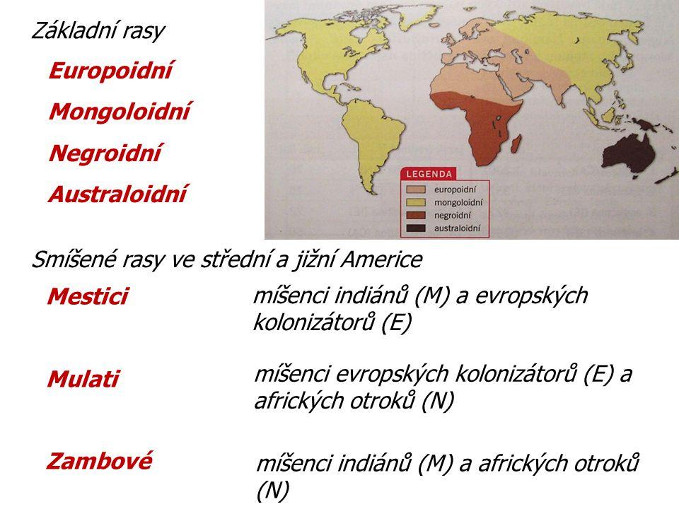 Základní rasy Europoidní. Mongoloidní. Negroidní. Australoidní. Smíšené rasy ve střední a jižní Americe.