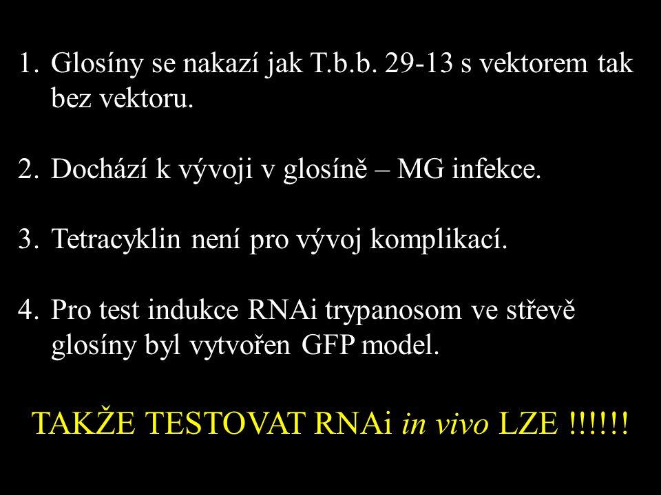 TAKŽE TESTOVAT RNAi in vivo LZE !!!!!!