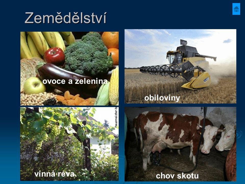 Zemědělství ovoce a zelenina obiloviny vinná réva chov skotu