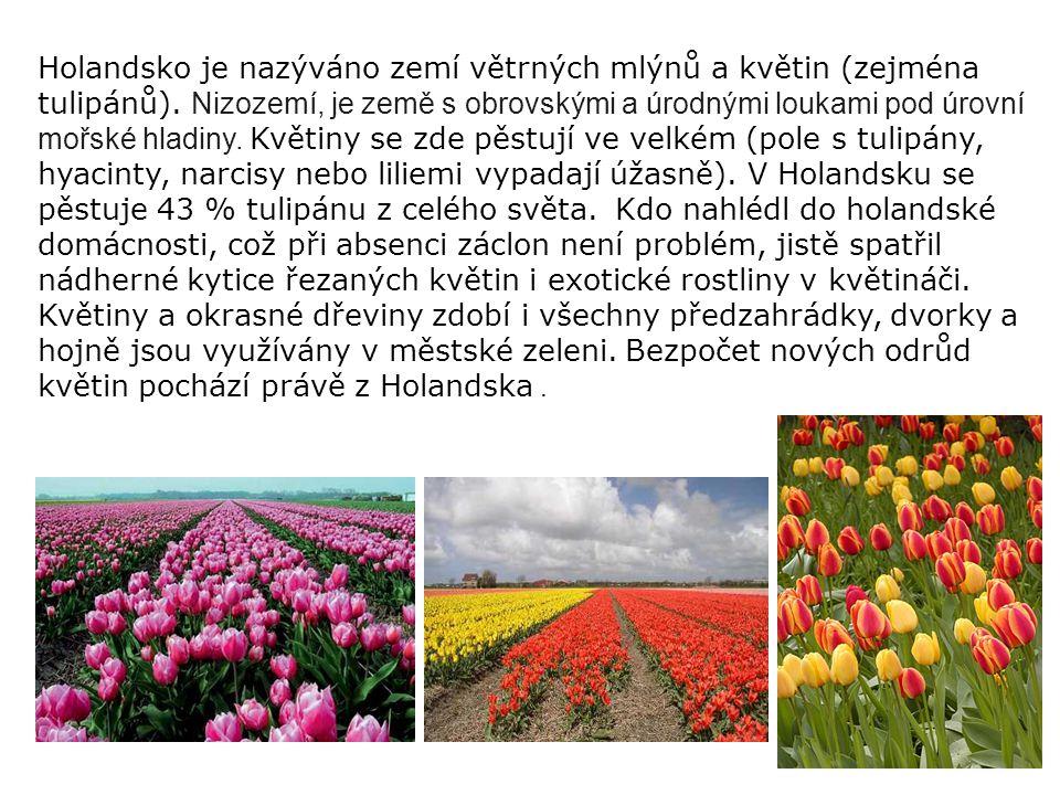 Holandsko je nazýváno zemí větrných mlýnů a květin (zejména tulipánů)