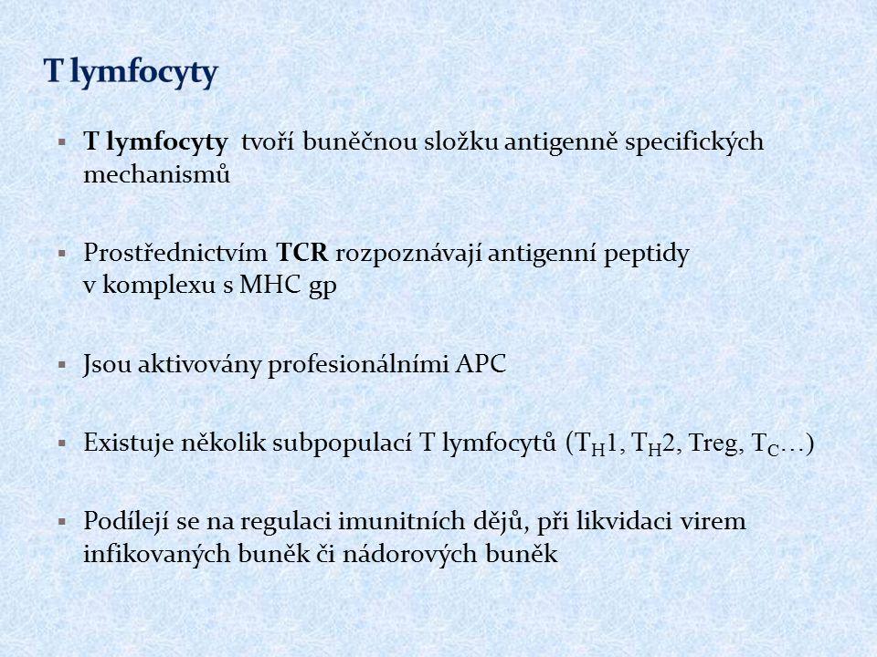 T lymfocyty T lymfocyty tvoří buněčnou složku antigenně specifických mechanismů.